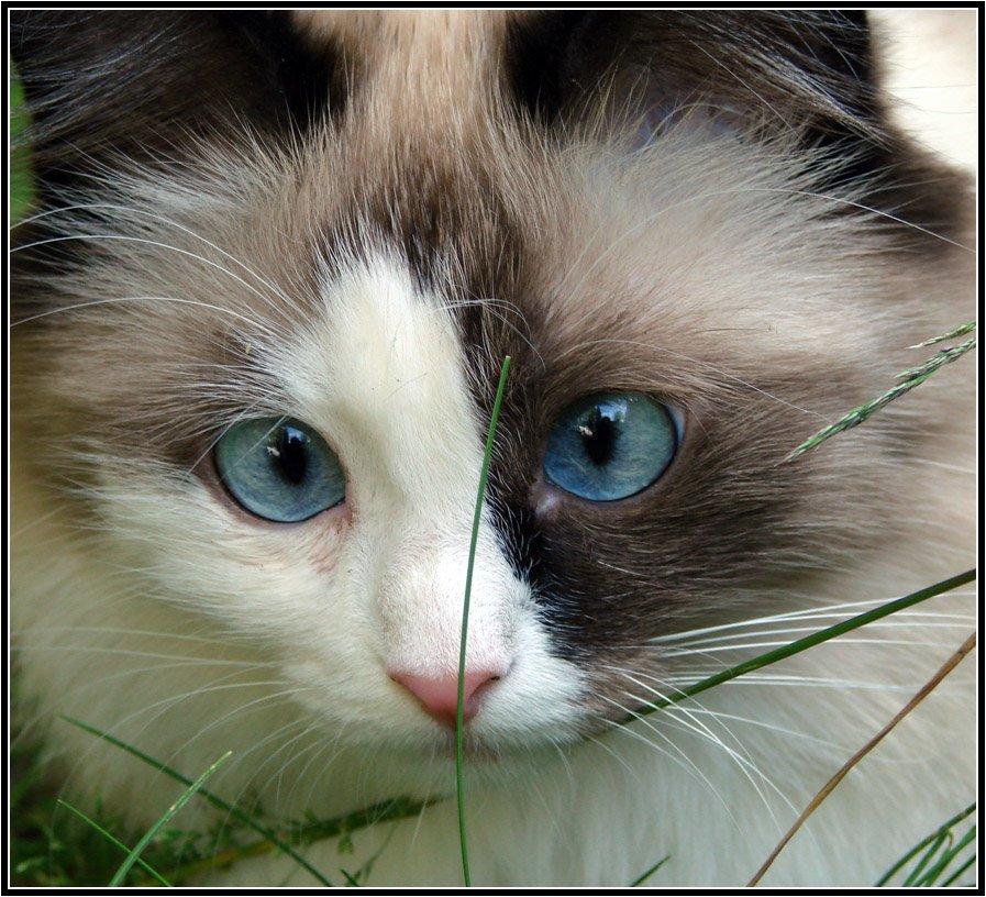 кошка, животные, глаза, автофокусировка, Михаил Андриеску