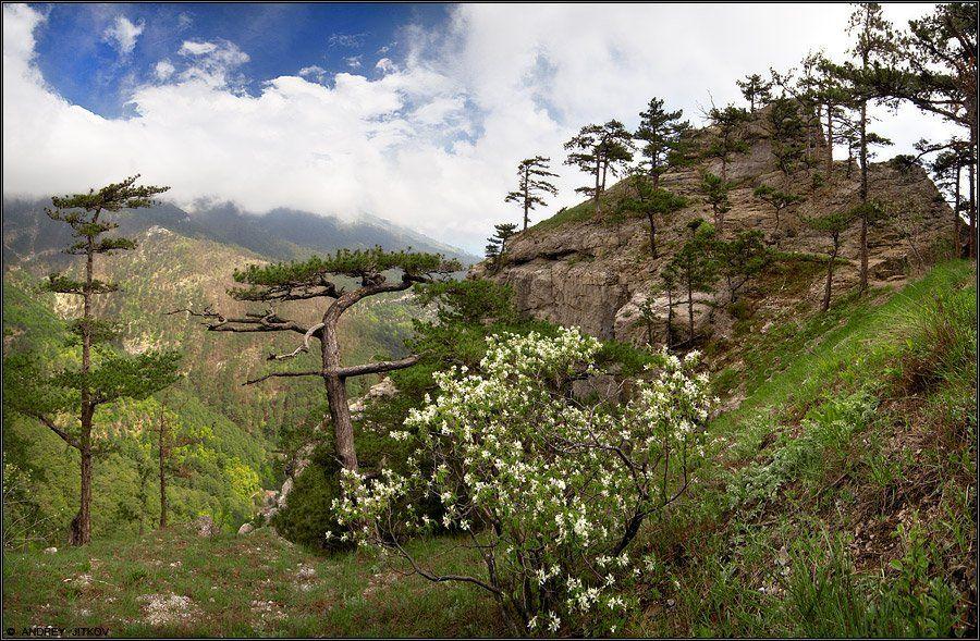 крым, ялта, горы, пейзаж, Андрей Житков