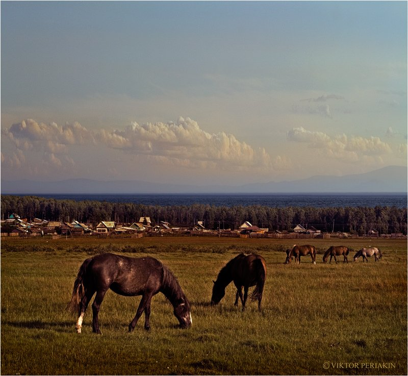 байкал, село, сухая, лошади, Виктор Перякин