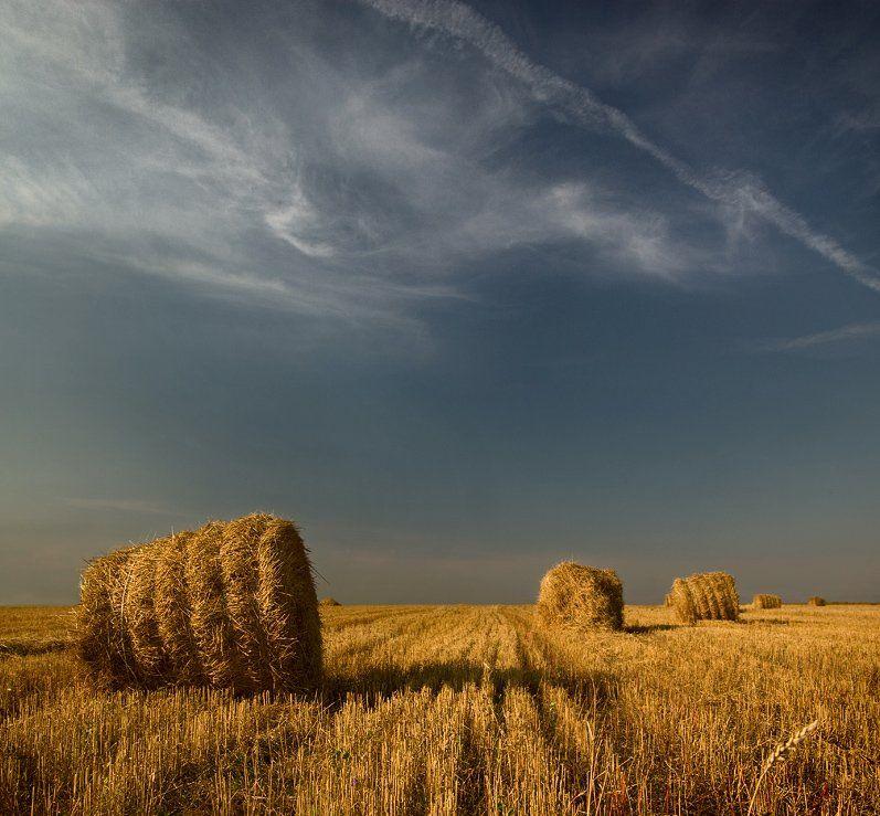 лето, поле, катышки, Александр Дубовицкий