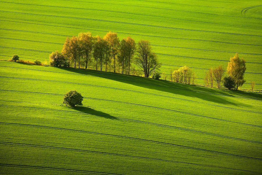 Evening, Germany, Meadow, S?chsische schweiz, Saxon, Saxon Switzerland, Spring, Trees, Daniel Řeřicha