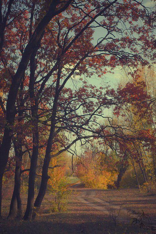 лес, дорога, дерево, желтый, красный, осень, пейзаж, россия, Ольга Глушкова