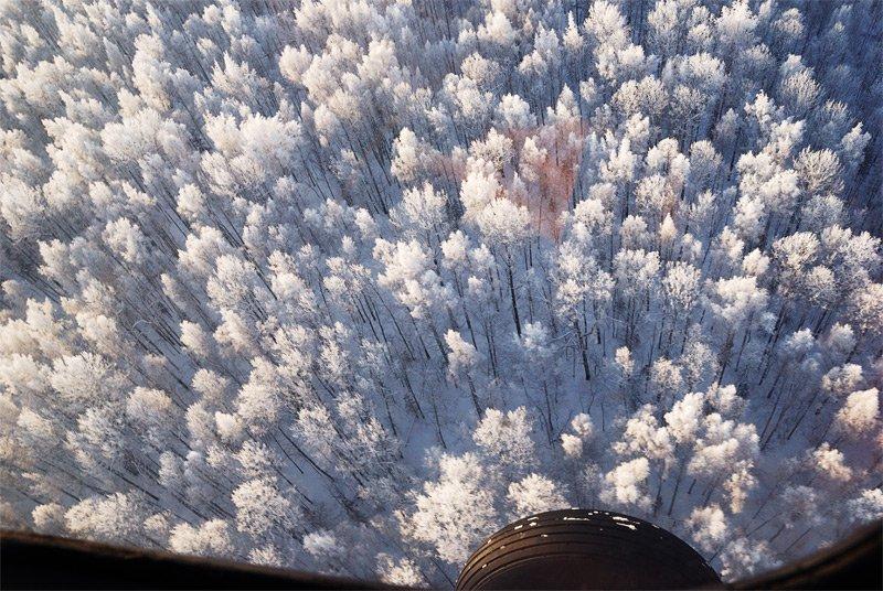 лес, иней, вертолет, зима, Евген