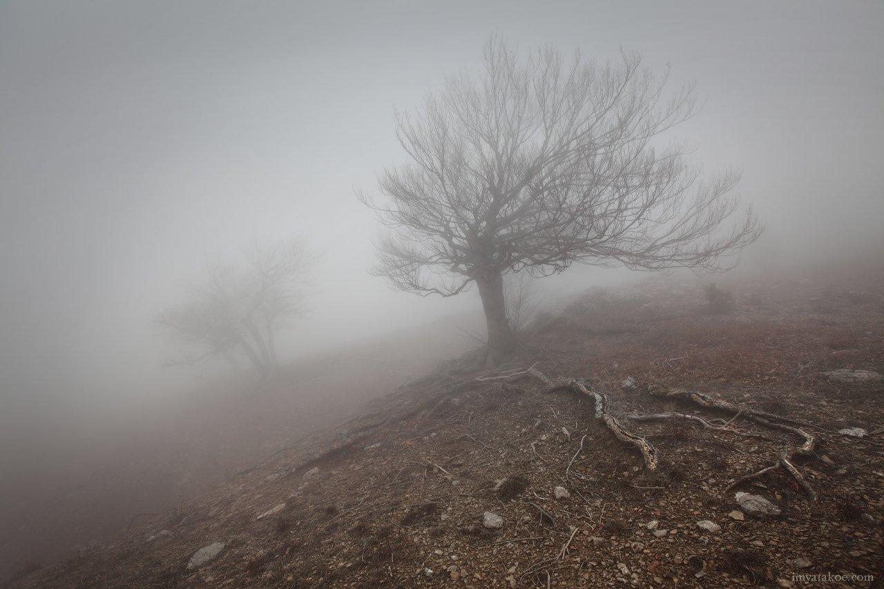 Крым, Туман, Чигинитра, Михаил Псарёв