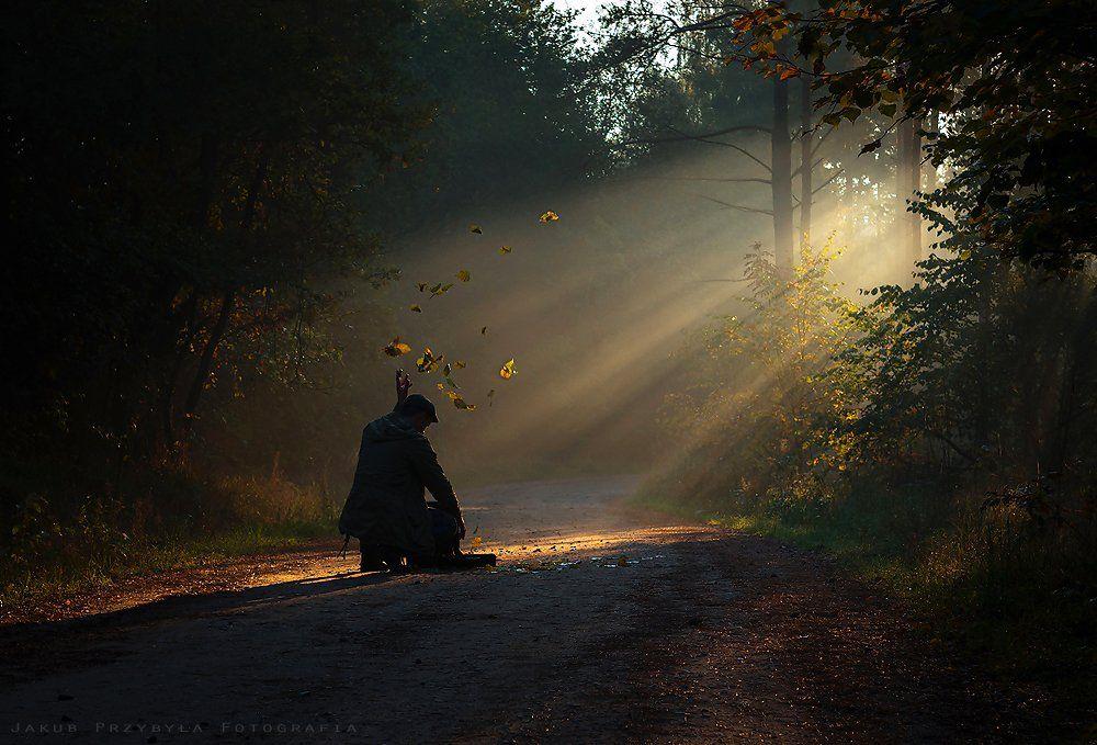 Fog, Forest, Jakub Przybyla