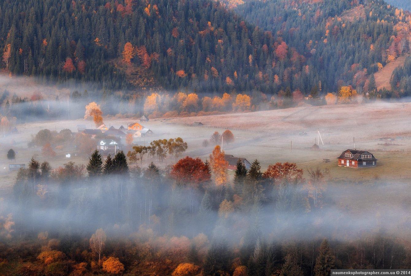 горы,зеленый,карпаты,луг, природа,рассвет,роса, склон,солнце,трава,туман, дземброня, Александр Науменко