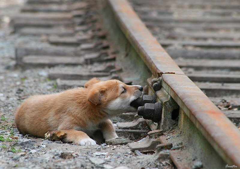 собаки, животные, щенки, Баяндин Алексей