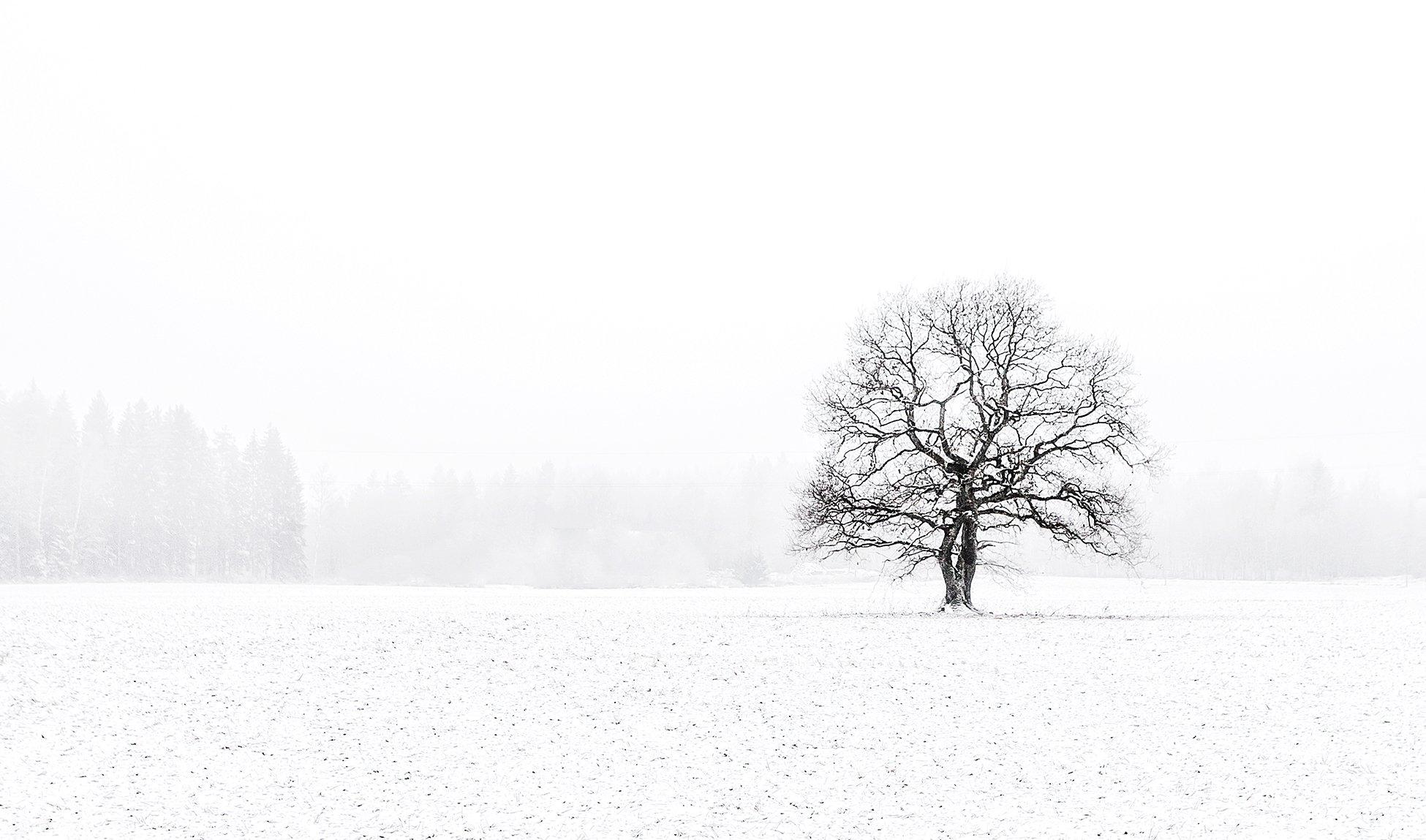 2014, Дерево, Зима, Контраст, Снег, Эстония, Kljuchenkow Aleksandr