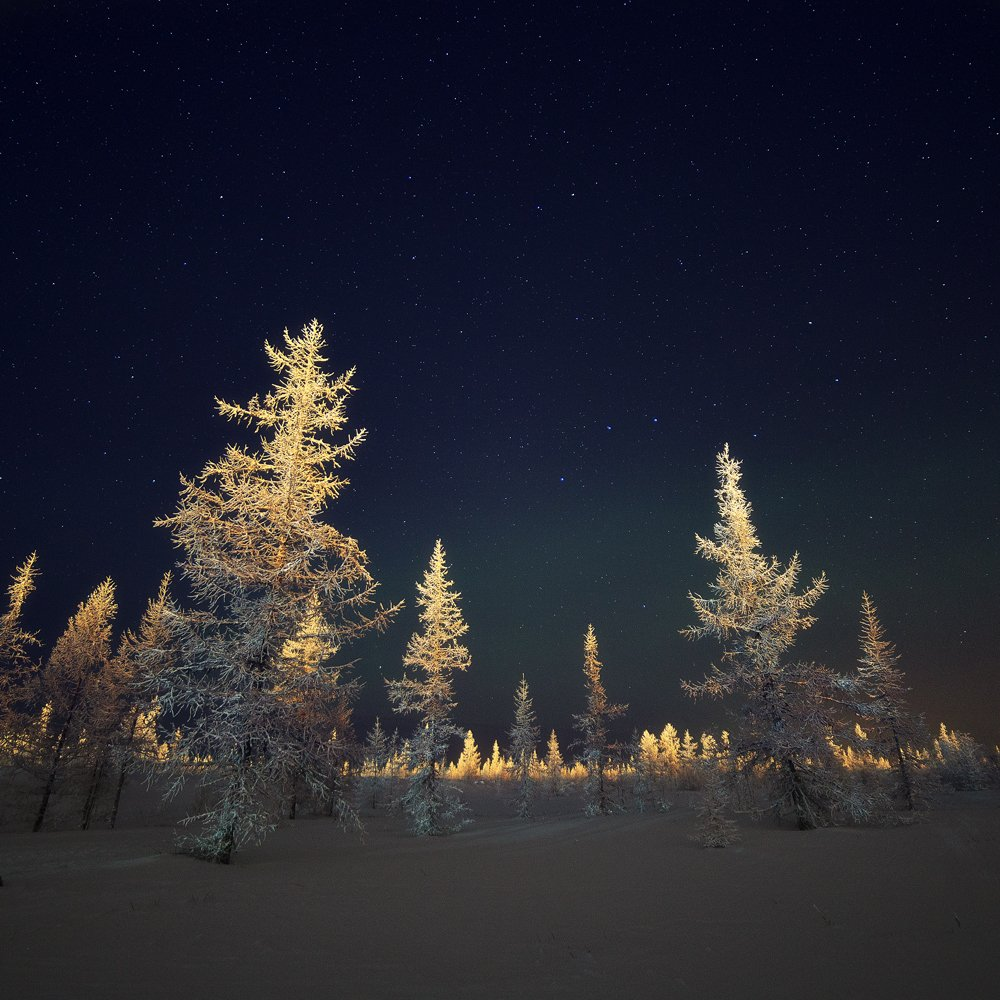 зима, лес, лесотундра, новыйуренгой, ночь, тундра, уренгой, ямал, янао, Камиль Нуреев