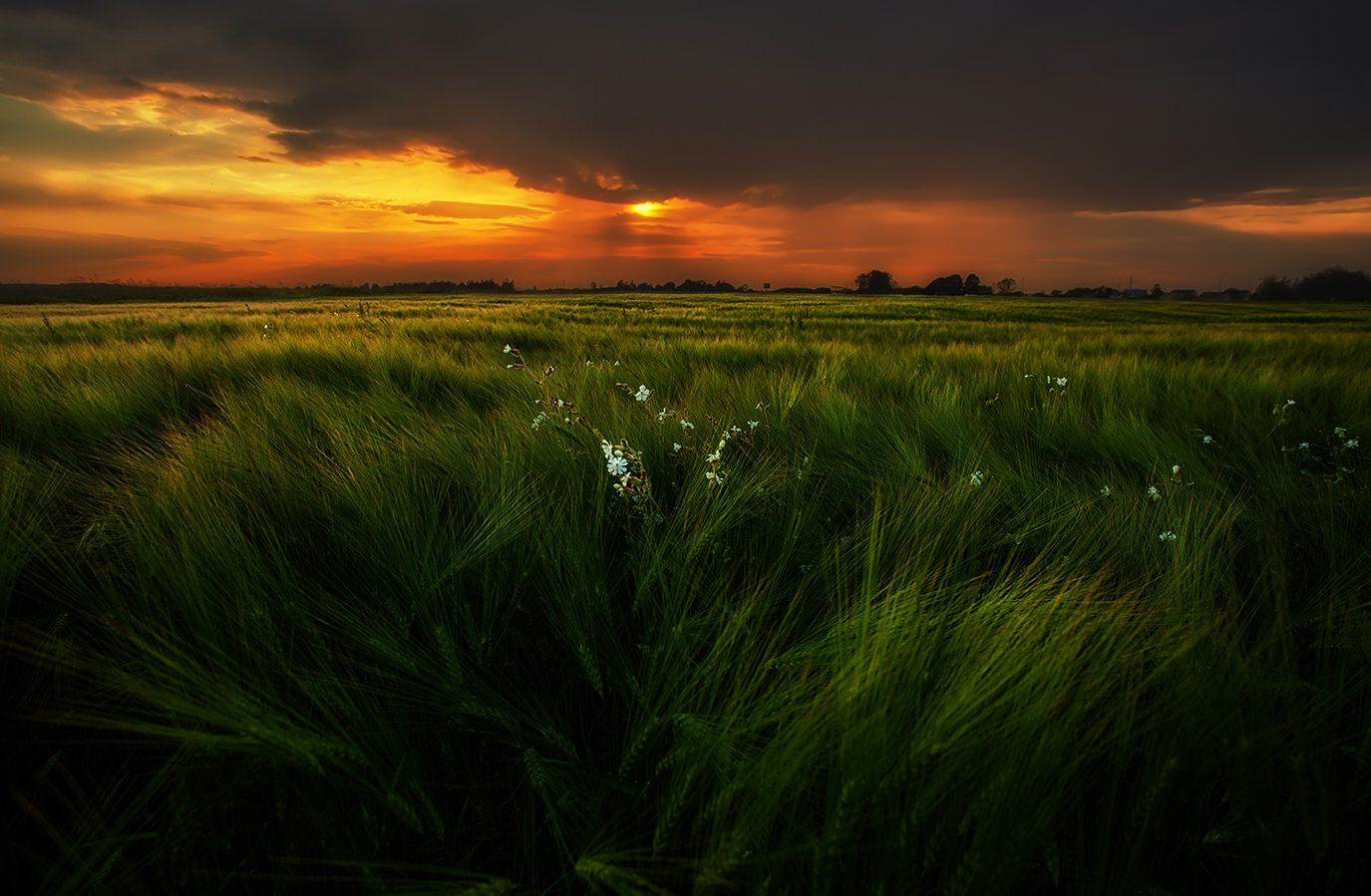 Field, Storm, Summer, Sunset, Гроза, Закат, Лето, Эстония, Kljuchenkow Aleksandr