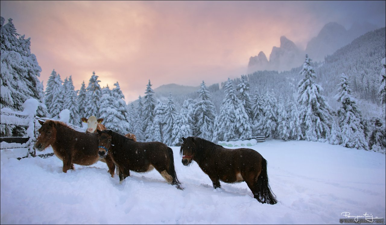 Alps, Dolomites, Horses, Italy, Snow, Sunrise, Andrew Thrasher
