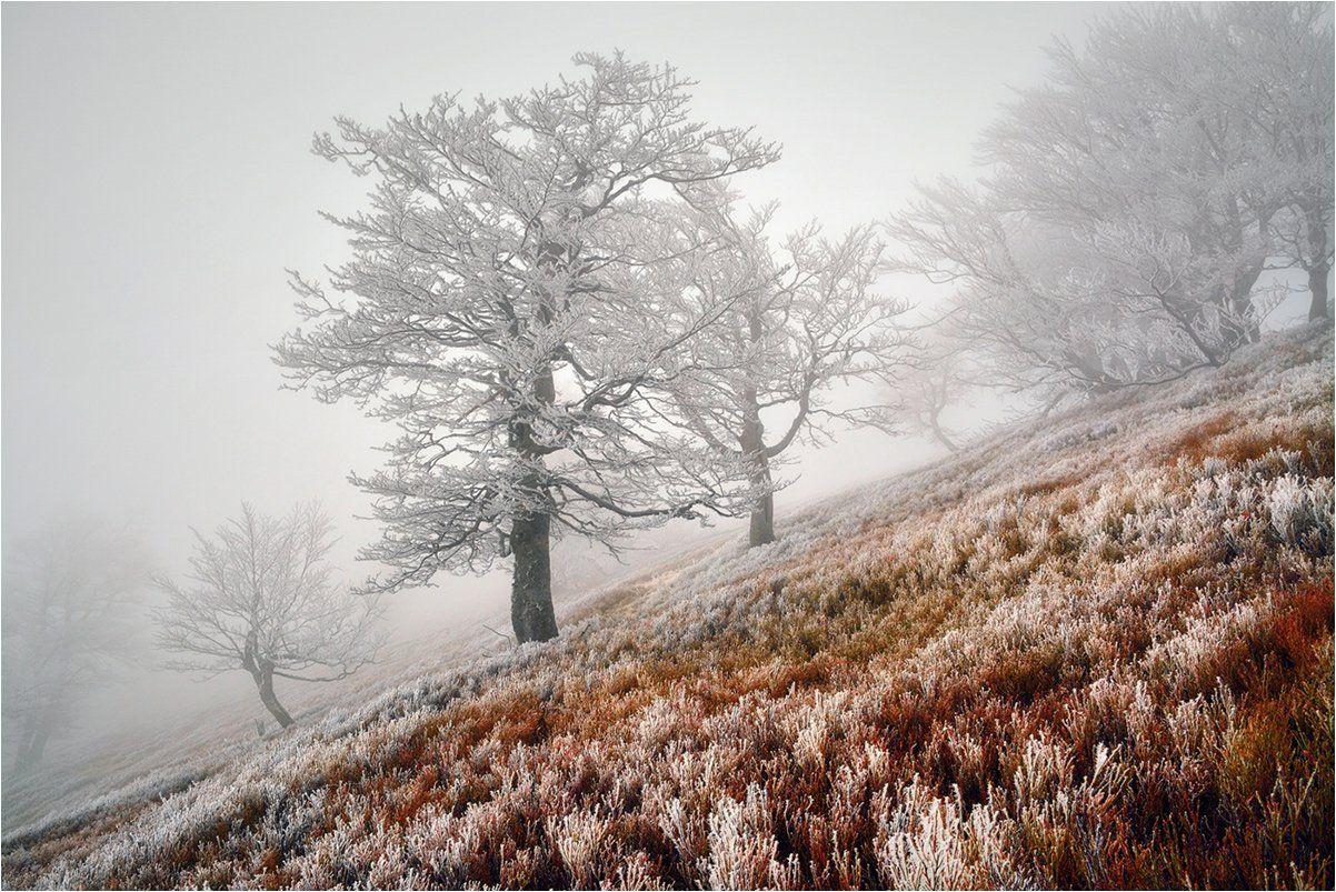 Горы, Деревья, Закарпатье, Зима, Иней, Карпаты, Мороз, Туман, Hanna Ponomarenko