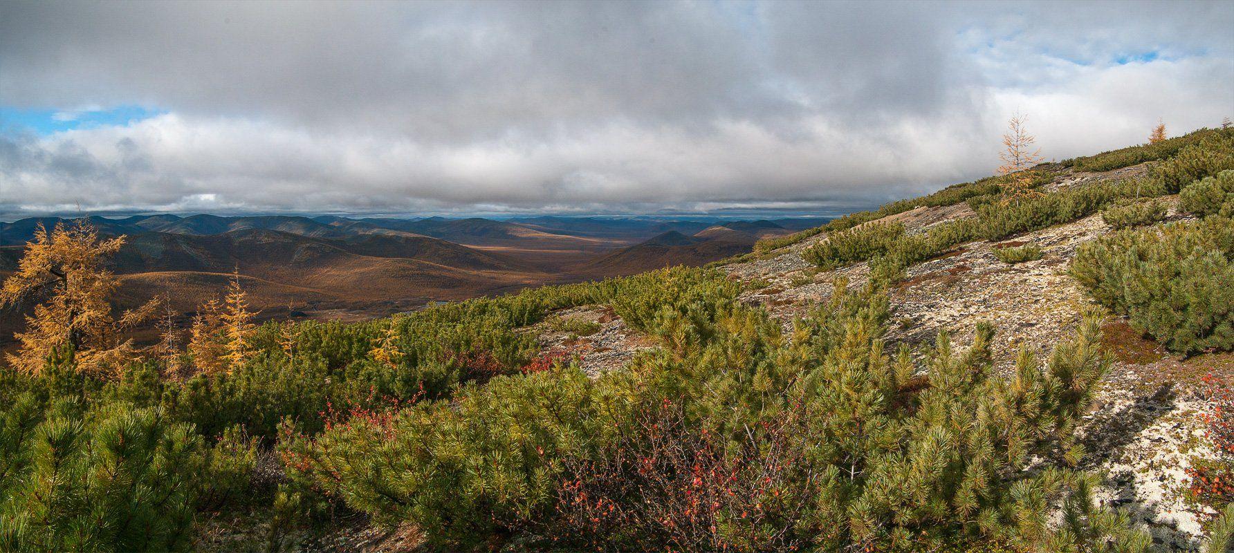 якутия, осень, лиственница, трасса, колыма, Александр Гиль
