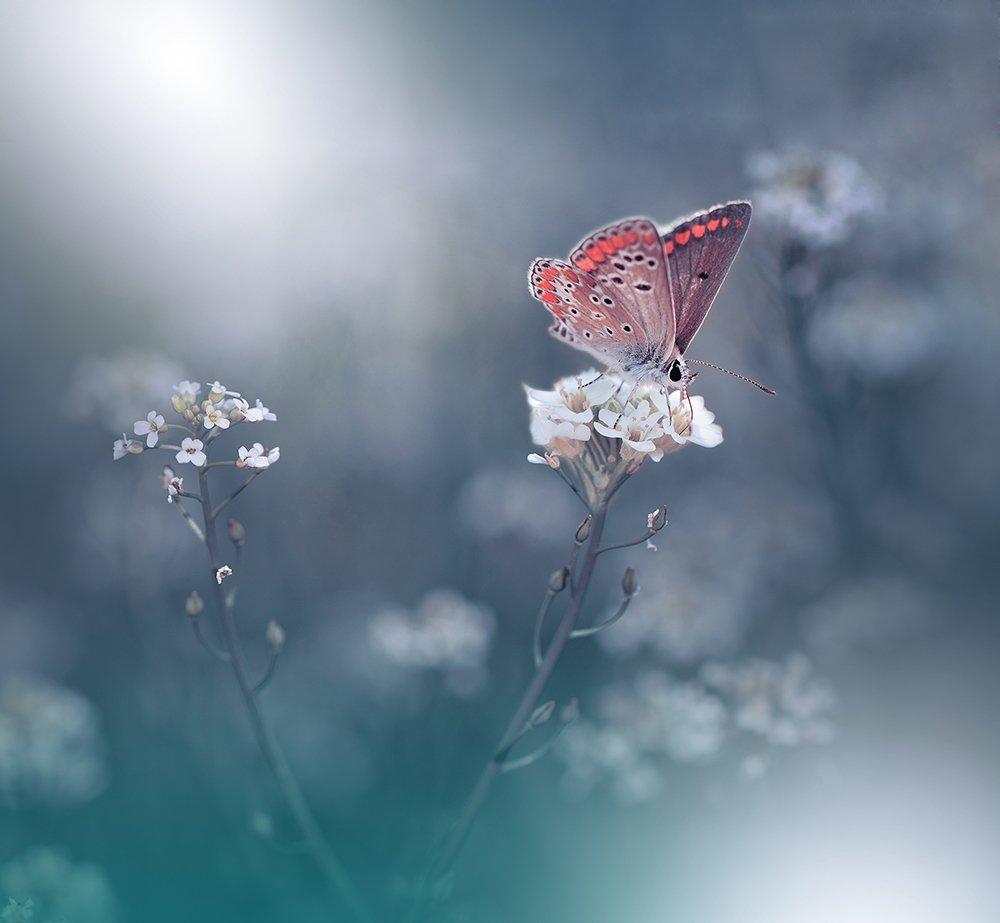 Butterfly, Close-up, Fine art, Light, Macro, Nature, Nikon, Juliana Nan