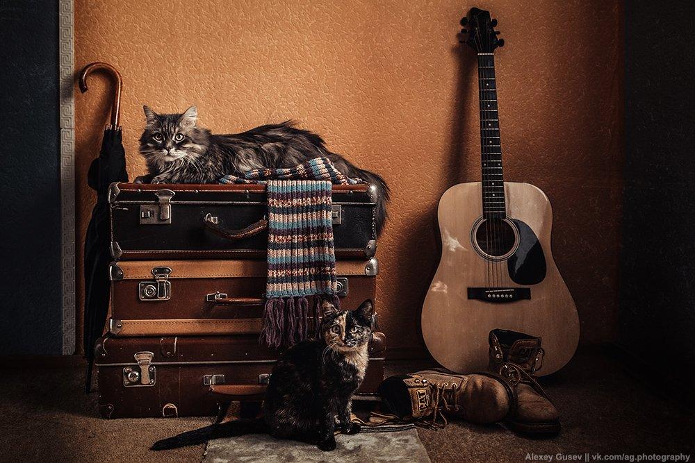 boots, cat, guitar, scarf, still life, suitcase, umbrella, Алексей Гусев
