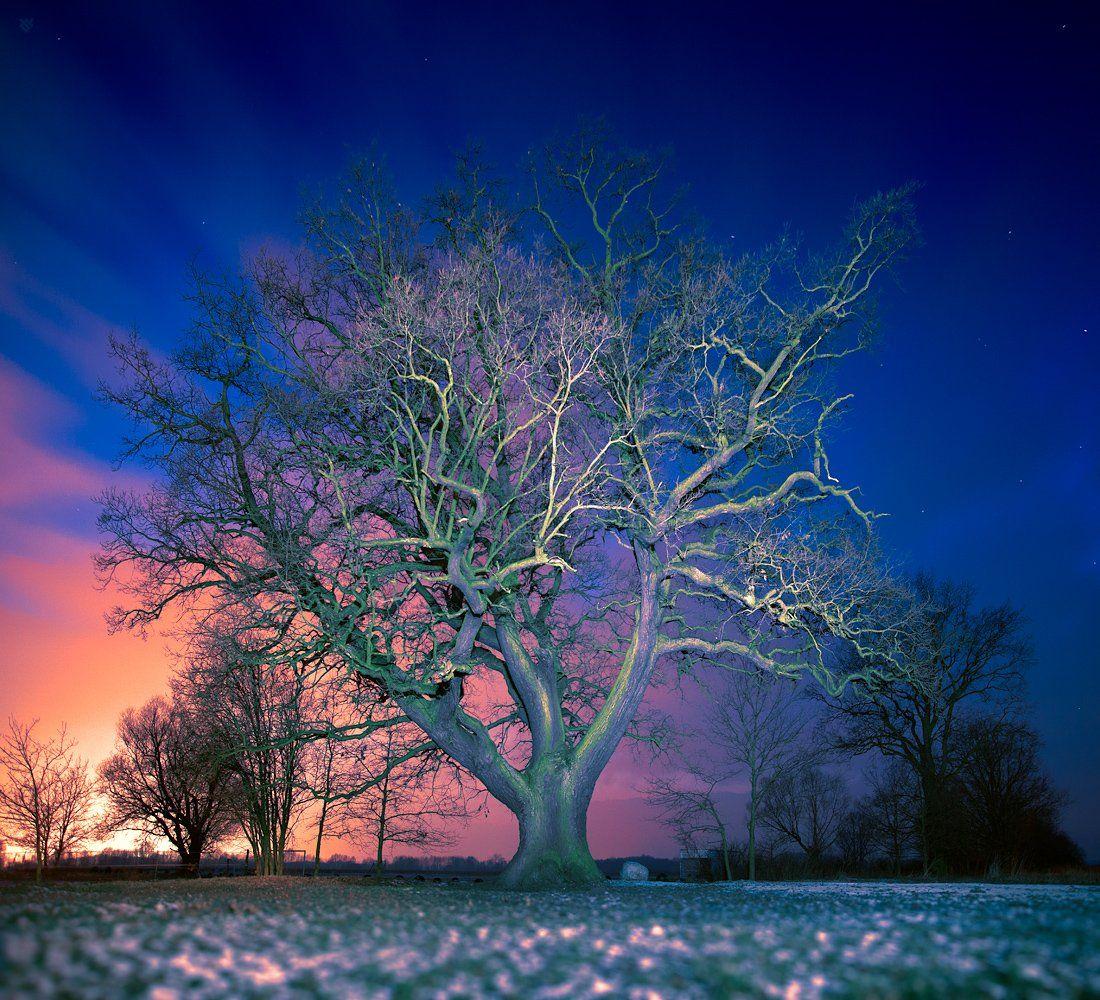 Night, Oak, Slav, Tree, Wojciech Grzanka