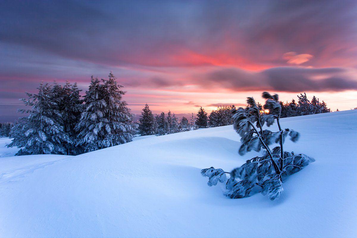 болгария, рассвет, зима, Павел Пронин