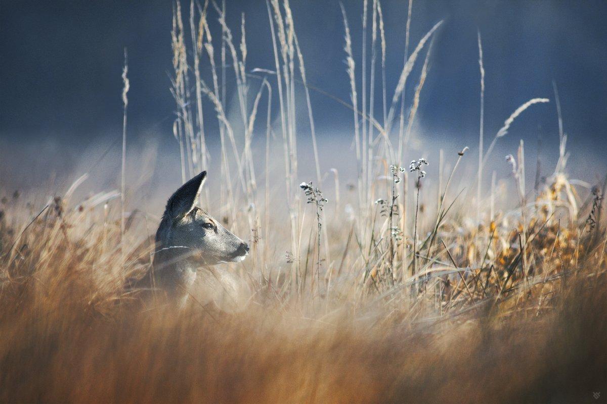 Morning, Roe-deer, Wildlife, Wojciech Grzanka