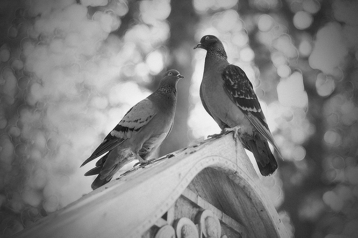 birds, голуби, птицы, Анна Кудрявцева