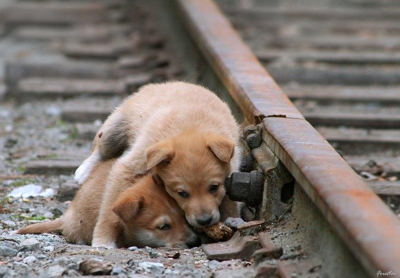 собаки, щенки, грусть, Баяндин Алексей
