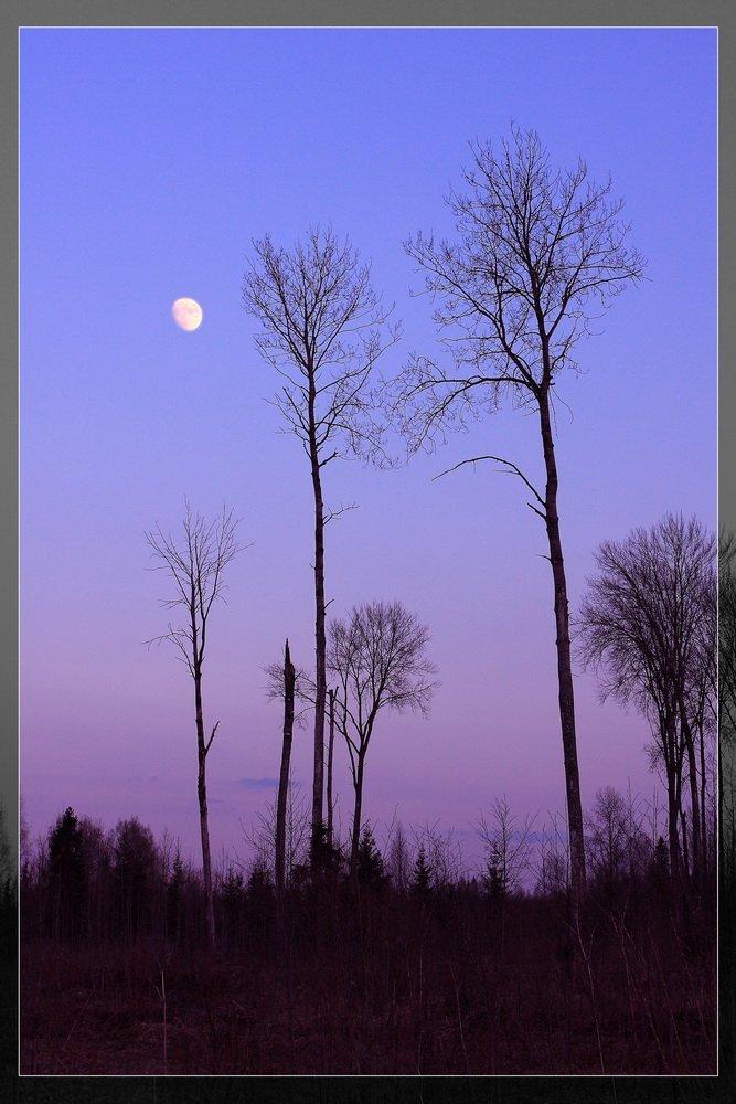 закат, луна, силуэты, Владимир