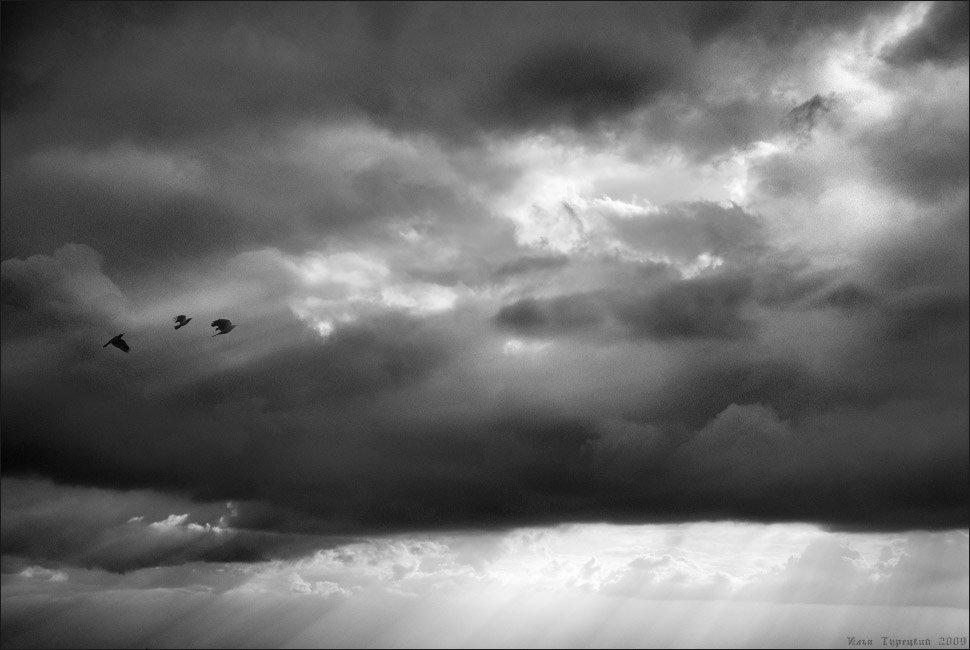 птицы, в, вышине, Илья Турецкий