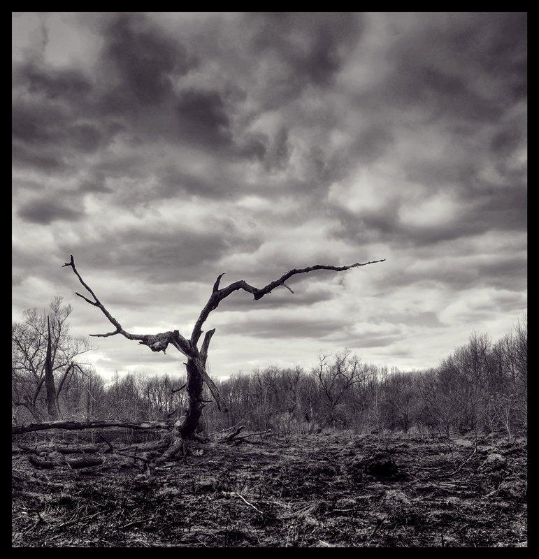 дерево,природа, Розенкова Светлана