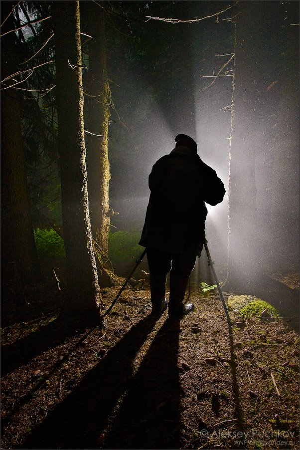 лес, дождь, фотограф, туман, вспышка, Алексей Пучков