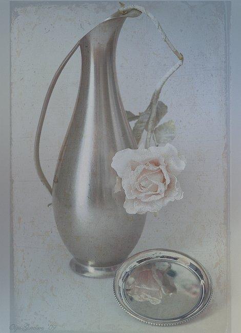 фото, натюрморт, цветок, Ольга Горелова