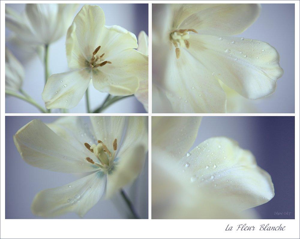 la, fleur, blanche, белые, цветы, капли, свет, Darn Cat