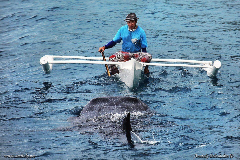 Акула, Анатолий Белощин, Китовая акула, Филиппины, Анатолий Белощин