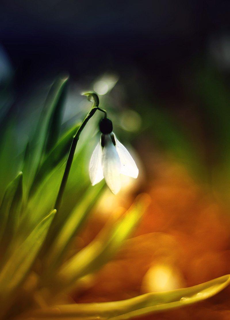 Цветы, Наталья