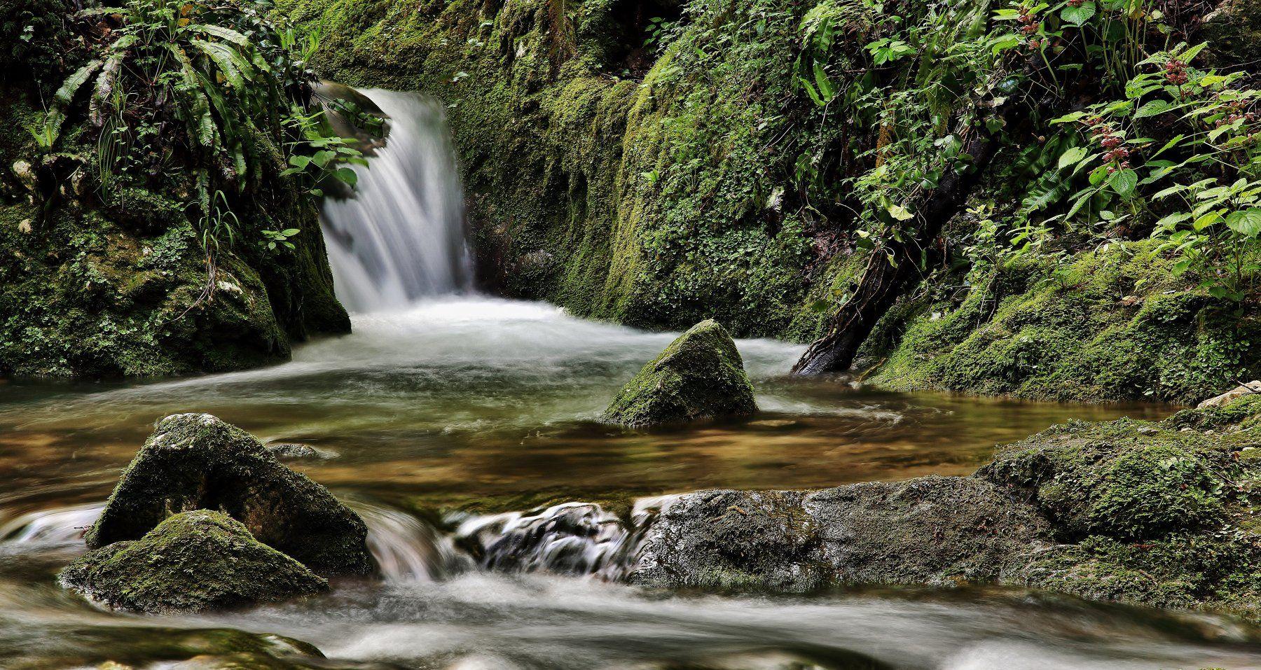 natura,torrente,acqua,muschio,vegetazione, paologr63