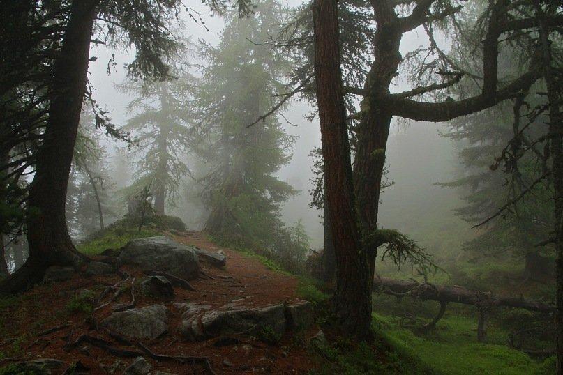 лес, Швейцария, Алечский, туман, Ekaterina Eicher (Velichko)