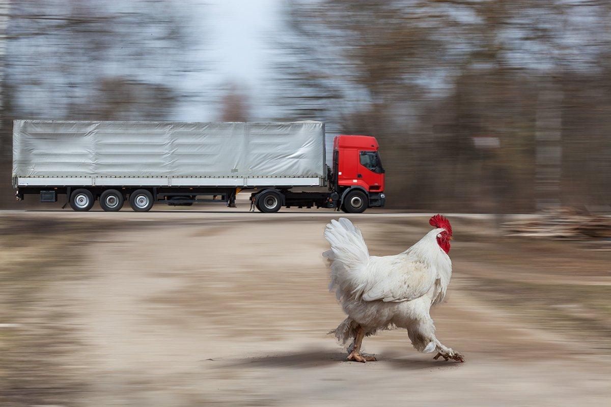 движение, скорость, проводка, трасса, грузовик, петух, Анатолий