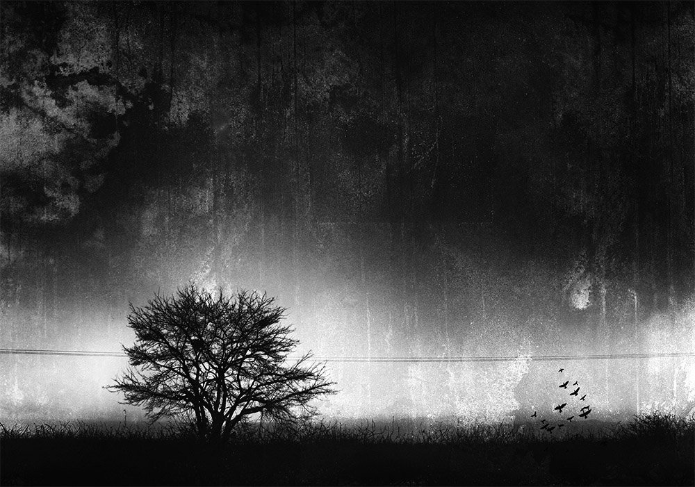 treet, fine art, milad safabakhsh, landscape, texture, birds, shadow, black and white,, milad safabakhsh