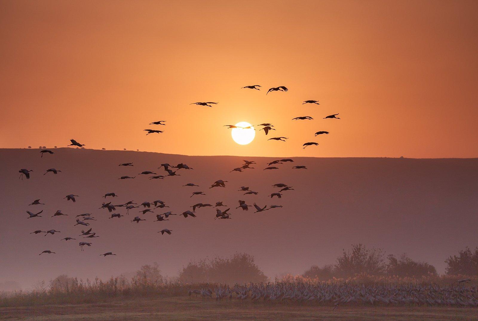 Восход, Журавли, Заповедник, Природа, Птицы, Рассвет, Серые журавли, Солнце, Туман, Утро, Наталья Рублина