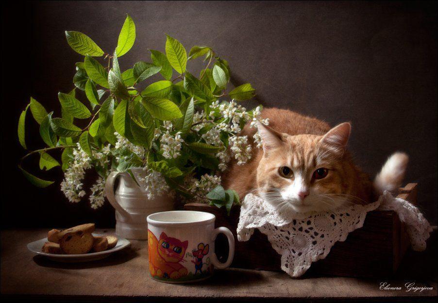 Весна, Молоко, Натюркотики, Рыжая кошка, Черёмуха, Eleonora Grigorjeva