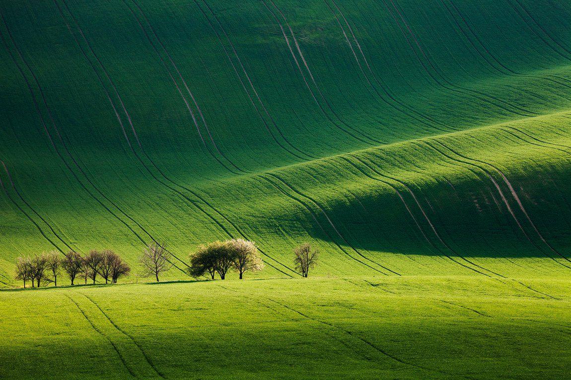 Czech republic, Fields, Green, Light, South moravia, Spring, Trees, Waves, Martin Rak