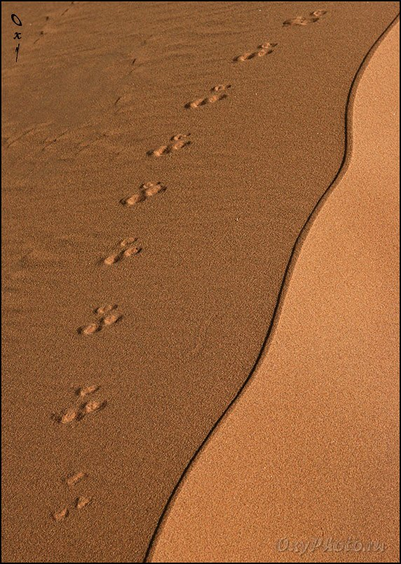 дюны, соссусвлеи, пустыня намиб, намибия, африка, dunes, sossusvlei, namib desert, namibia, africa, Оксана Борц