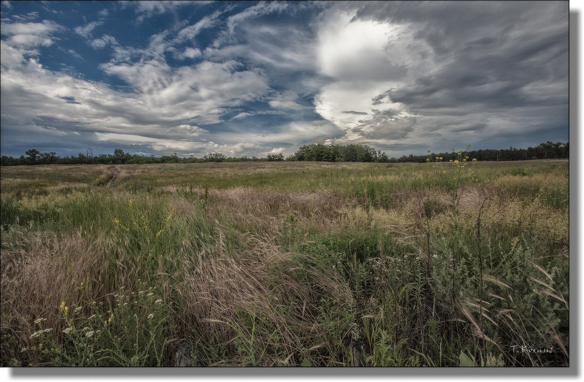 степь,трава,лето, tkornus