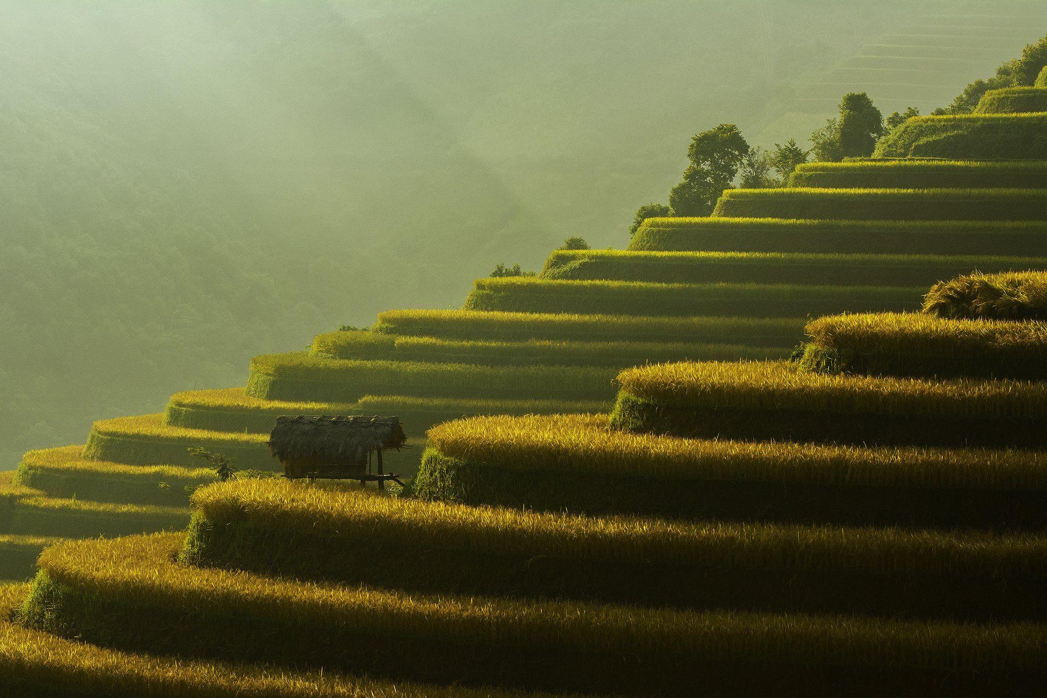 Asia, Asian, Beautiful, China, Culture, Field, Green, Landscape, Nikon, Photography, Plants, Rice, Terraces rice field, Thailand, Vietnam, Yellow, Saravut Whanset