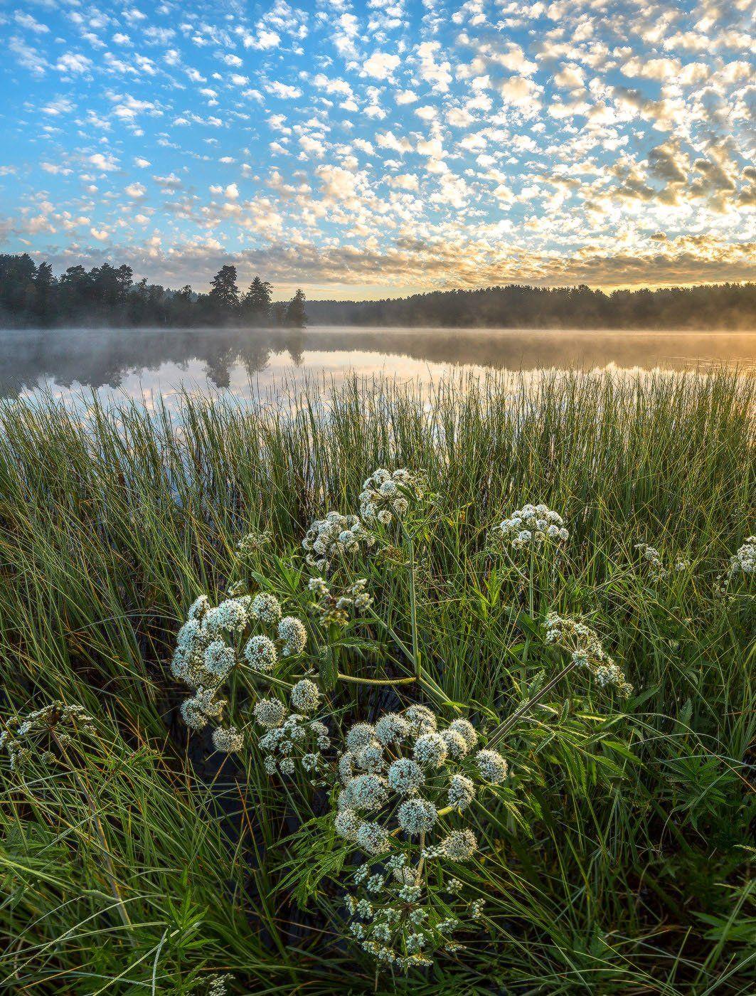 Весна, Рассвет, Цветы, Лашков Фёдор