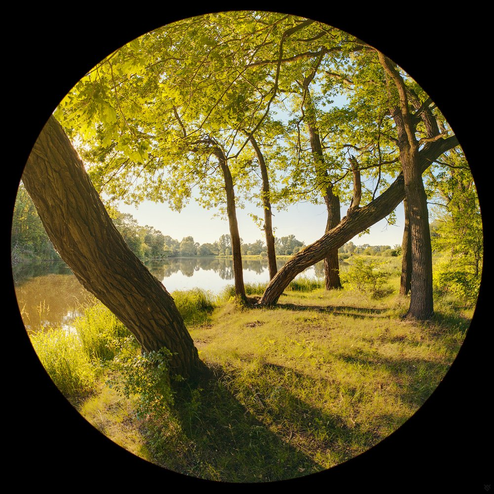 trees, water, mood, nature, Wojciech Grzanka