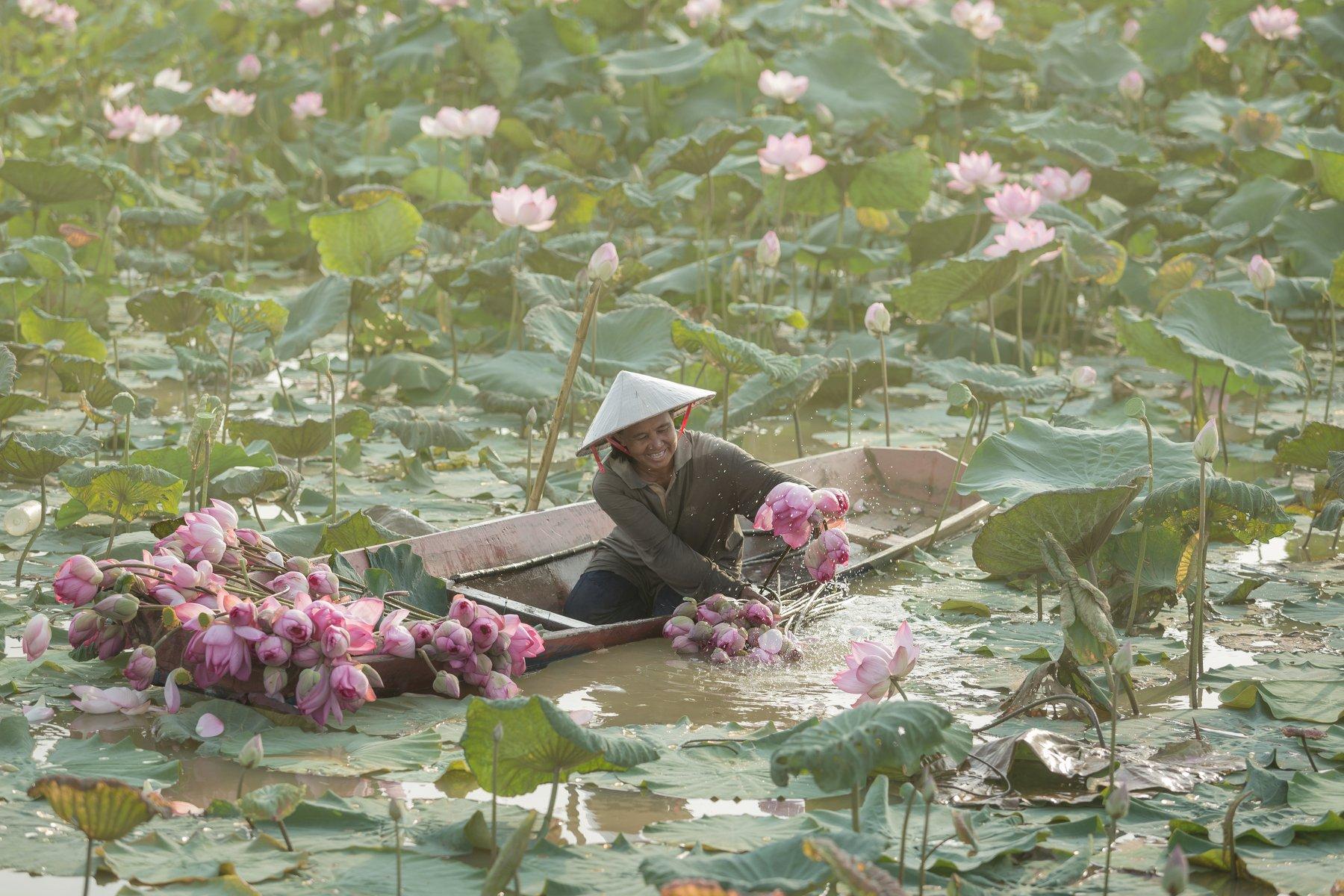 life,woman,living,lifestyle,lotus,garden,flower,park,lake,photo,, SUTIPORN SOMNAM