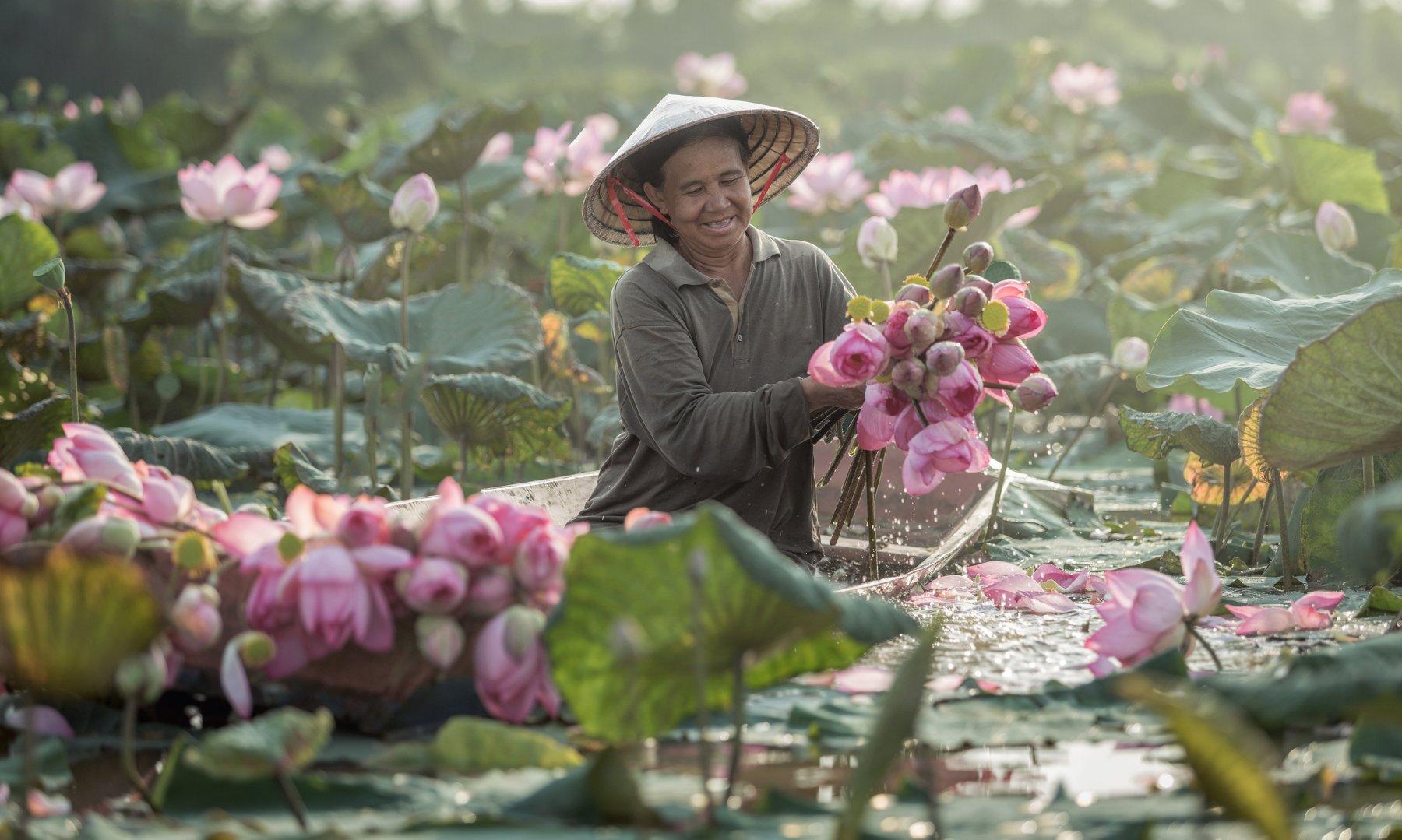 life,thaipeople,women,boat,lotus,flower,pink,morning,plant,lake,asia,, SUTIPORN SOMNAM
