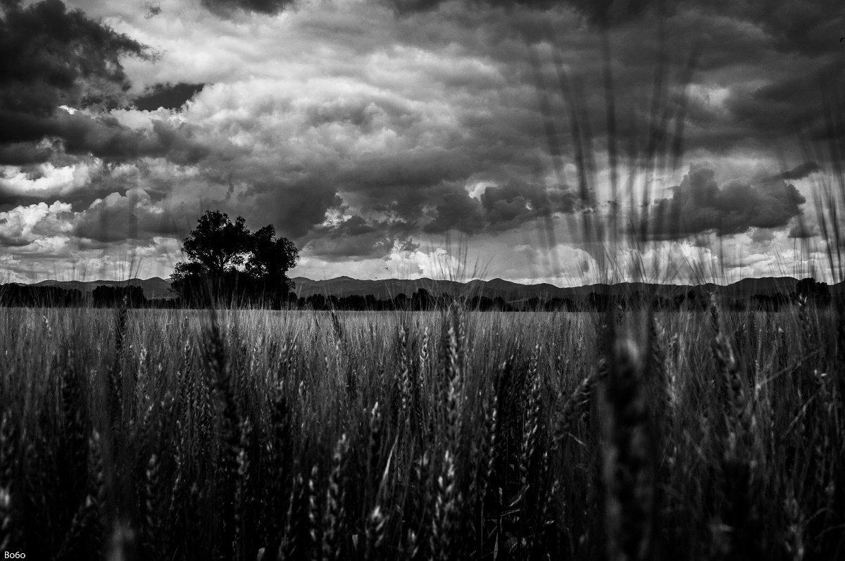 storm, wheat, tree, field, landscape, black and white, clouds, nature, spring,, Boris Preslavski