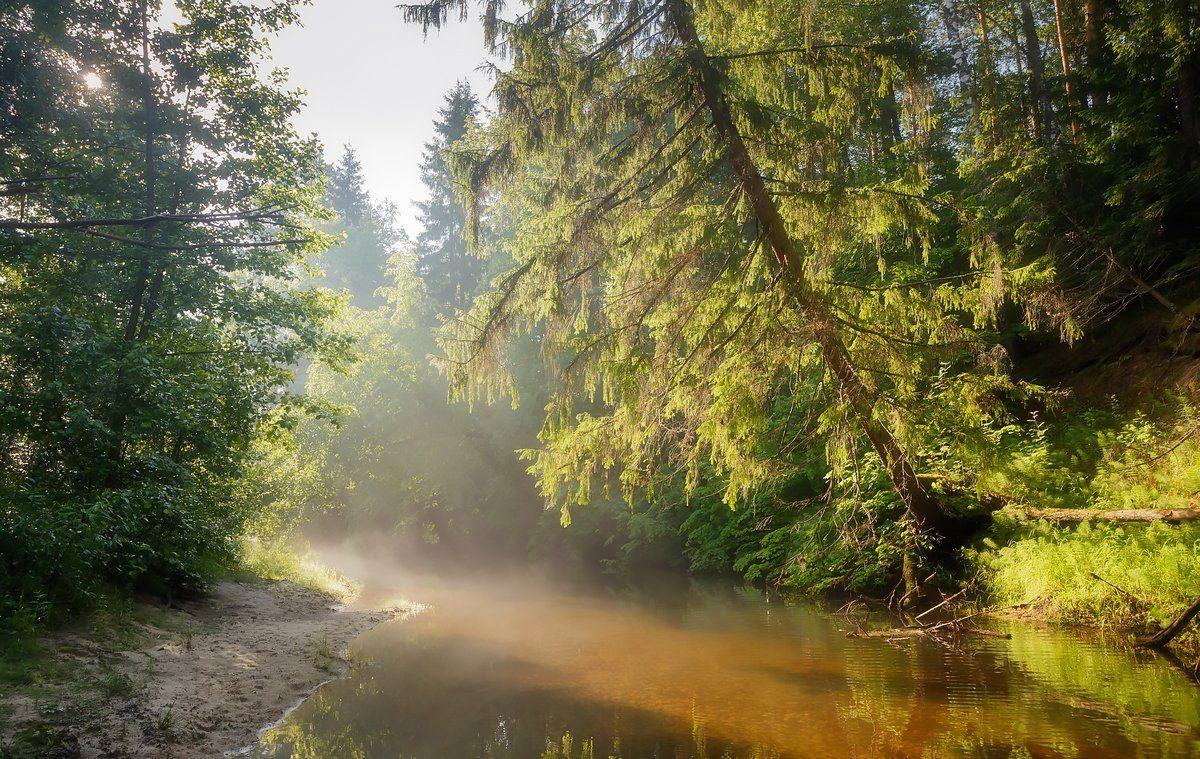 пейзаж, саров, вода, дерево, лето, лучь, отмель, песок, прозрачная, река, солечный, тихое, туман, утро, Александр Чибиркин