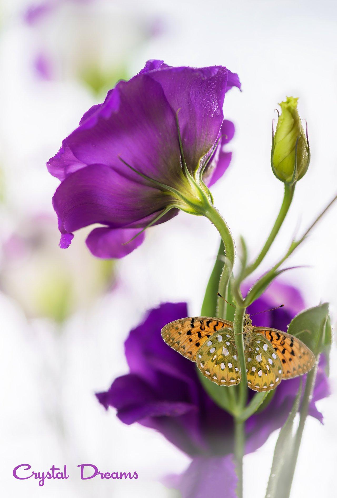 Art, Beauty, Butterfly, Color, Crystal Dreams, Macro, Magic, Nature, Крылова Татьяна