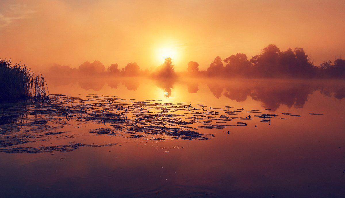 восход, природа, рассвет, река дубна.подмосковье, солнце, туман, утро, Dmitry Postnikov
